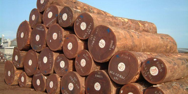 gỗ lim BDA - giá gỗ lim nam phi 2019