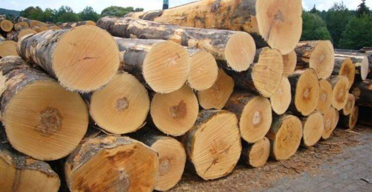 Ứng dụng thực tế của gỗ sồi là gì?
